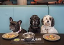 Dogs Welcome to Drop In at Riverside Studios