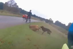 Owner Fined After Dog Attacks Deer in Richmond Park
