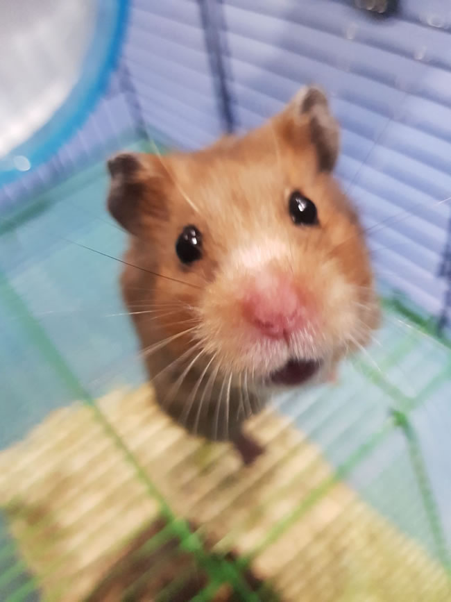 Hamster Rescued After Being Dumped In King George's Park in Wandsworth SW18