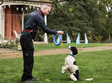 Battersea Dogs & Cats Home Launches Virtual Puppy Training